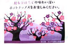 h150306Potatrip-Umekobucha2